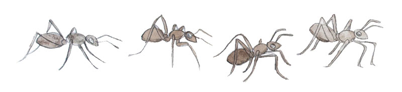 Illustration of ants by Jon Woolley