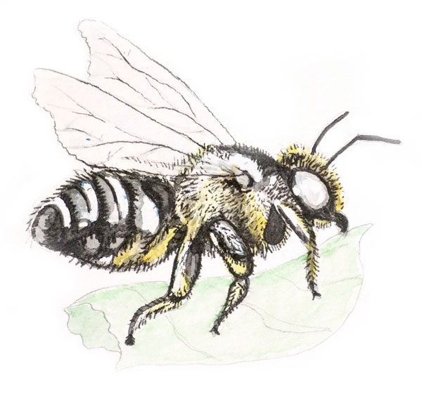 Illustration of bee by Jon Woolley