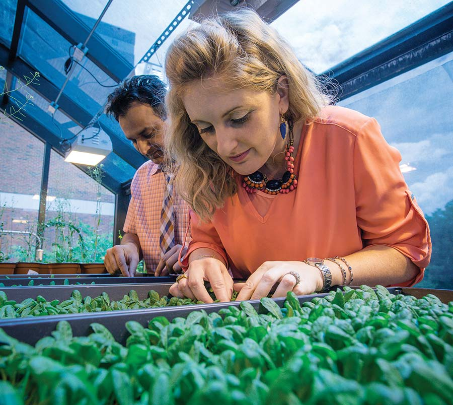 Photo of Shahid and Karolina Mukhtar examining trays of Arabidopsis plants