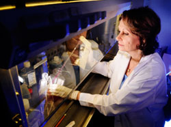 Researcher Susan Bellis in the lab