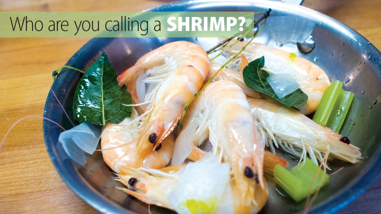 Photo of prepared shrimp in dish