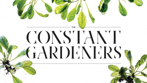 Photo of Arabidopsis thaliana plants with headline: The Constant Gardeners
