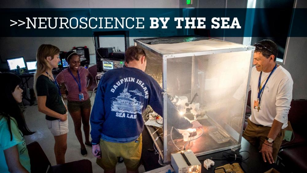 Neuroscience by the Sea