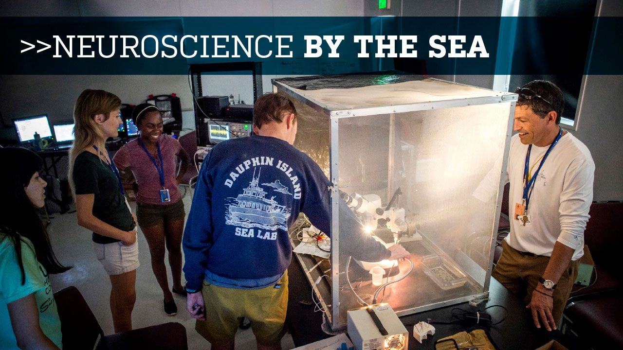 Photo of students examining effects of light on optic nerve at Dauphin Island Sea Lab; headline: Neuroscience by the Sea